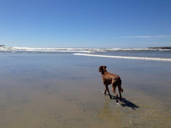 ocean-beach-dog-park