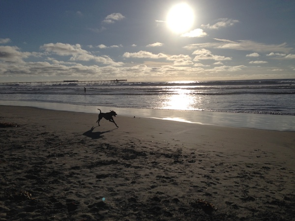 dog running on beach san diego