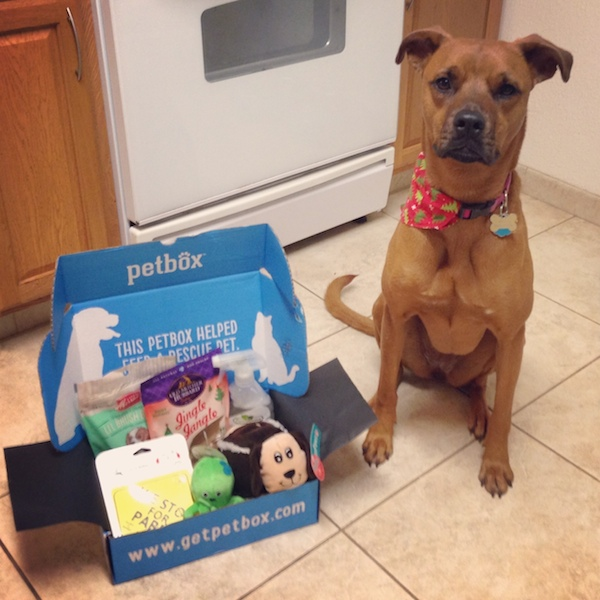 dog loves petbox